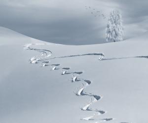 coliving_ski4