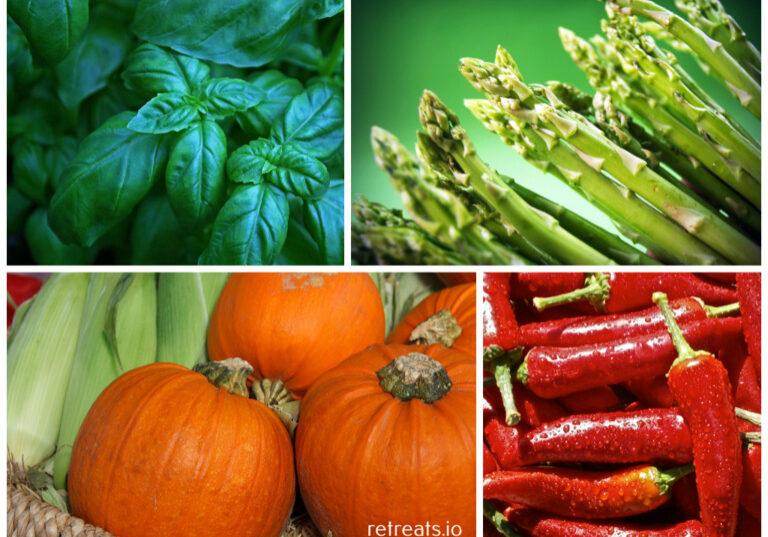 retreats-veggie-cooking2